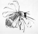 Bee by Jeremy Scrine, Painting, Charcoal on Paper