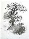 Oak 2 by Jeremy Scrine, Drawing, Charcoal on Paper