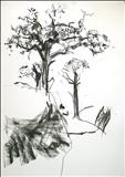 Oak 5 by Jeremy Scrine, Drawing, Charcoal on Paper